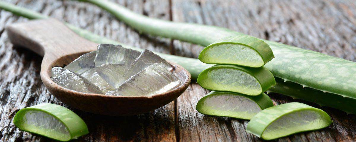 Aloes - kosmetyki i zabiegi kosmetyczne z aloesem